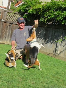 Photo by Marty Cheek David Enney and two of his rescued beagles play in the backyard of his Morgan Hill home. Enney started the South County Animal Rescue Friends.