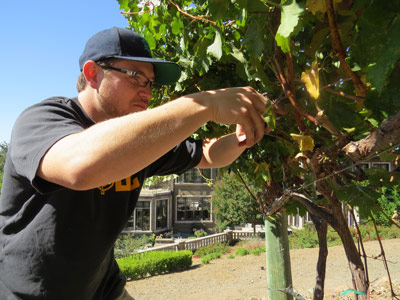 Photo by Marty Cheek Nate Castillo, 25, prunes a grape vine on the family property recently. The winery's first effort was a Petit Syrah.