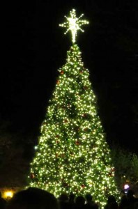 2015 Downtown Morgan Hill Holiday Tree at lighting ceremony