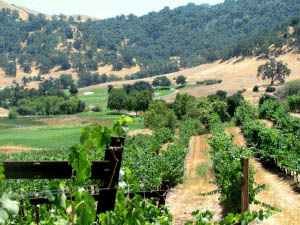 Photo courtesy www.foodielovesfitness.com A view of CordeValle Golf Resort from Clos LaChance winery.