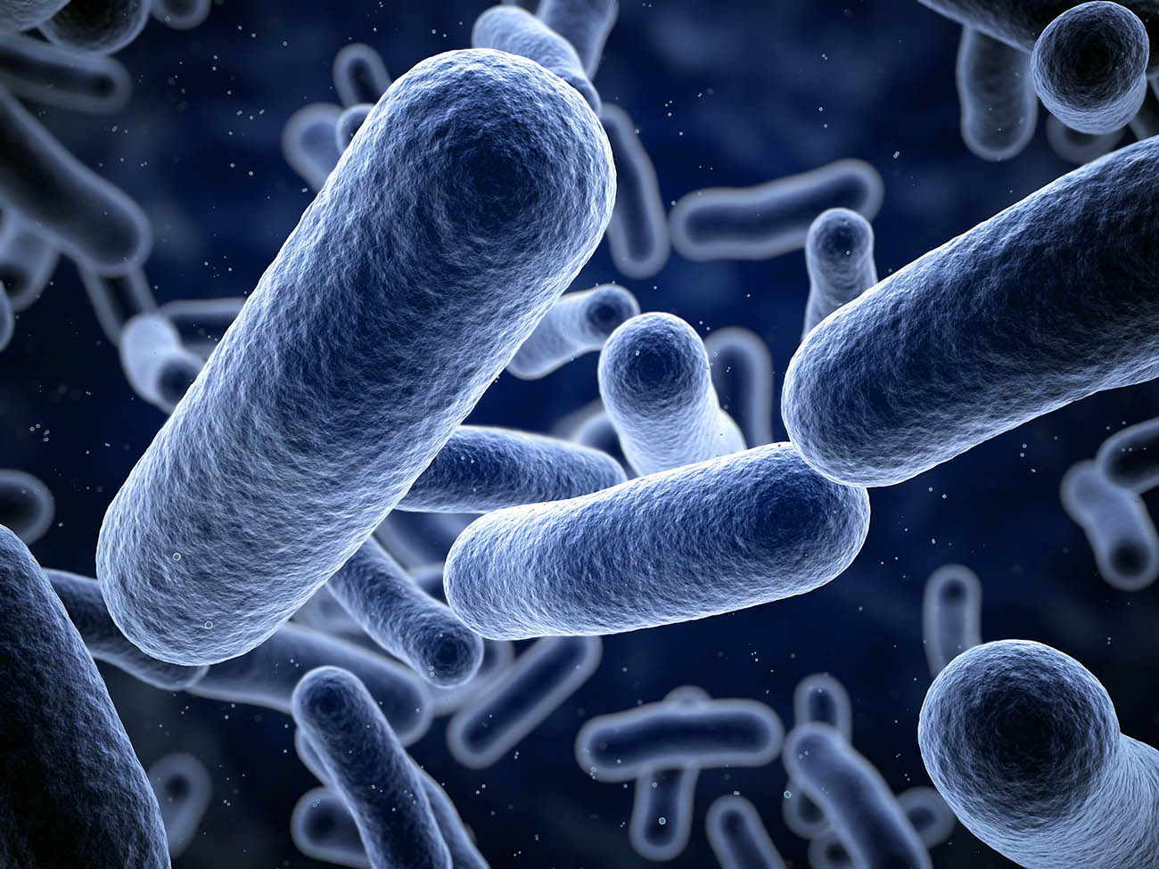 Bacteria closeup