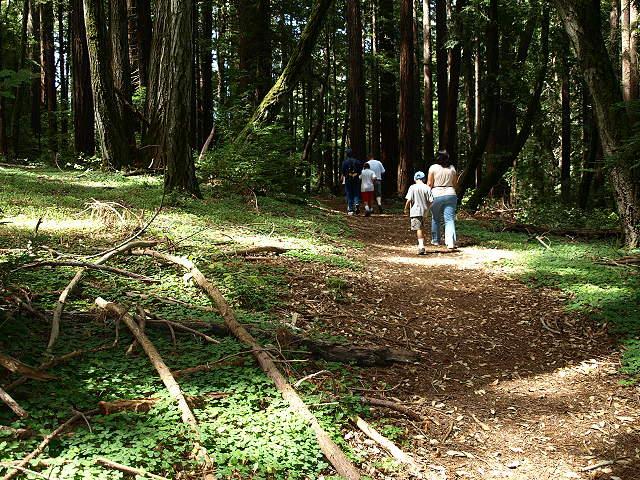 Image result for Mt. Madonna County Park