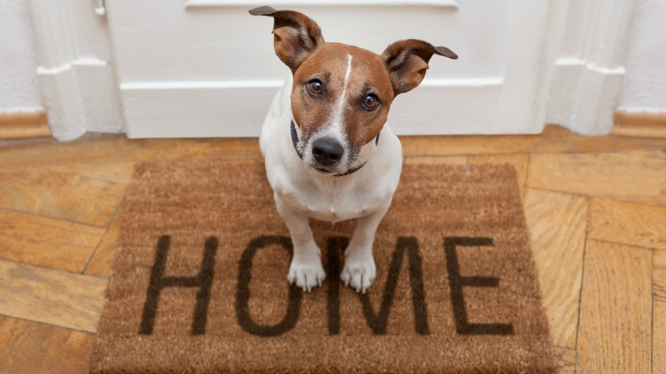 Image result for dogs at home