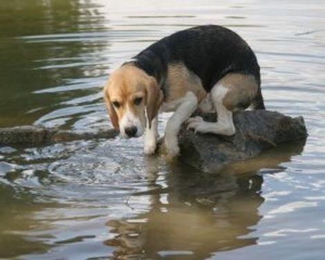 Image result for Adopt a dog hurricane