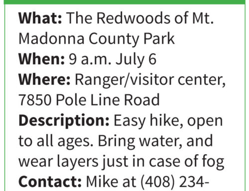 Take a Hike . . .with  Mike Monroe: Explore the majestic redwoods of Mt. Madonna County Park