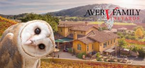 WERC Barn Owl Release and Fundraiser @ Aver Family Vineyards | Gilroy | California | United States