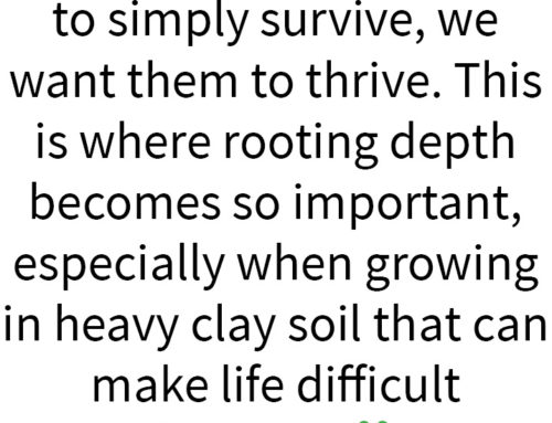 Your Garden . . . with Kate Russell: How deep do roots grow in the soil of your Morgan Hill garden?