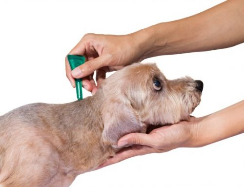 Your Pets … with  Dr. Jeanne Haggerty-Arcay: Make an educated decision when choosing best flea control products