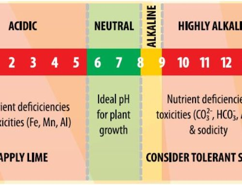 Your Garden … with Kate Russell: The right soil chemistry balance will go a long way for healthy plants