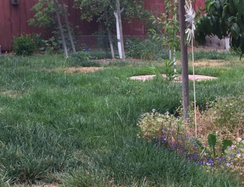 Your Garden … with Kate Russell: Trade in your lawn for a meadow and reduce maintenance chores