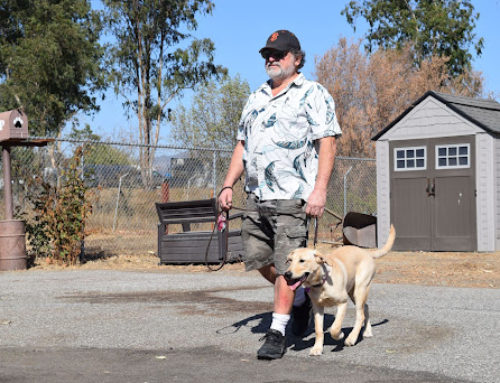 Operation Freedom Paws celebrates a decade of helping veterans, others, with service dogs